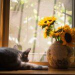 pexels-cats-coming-674580